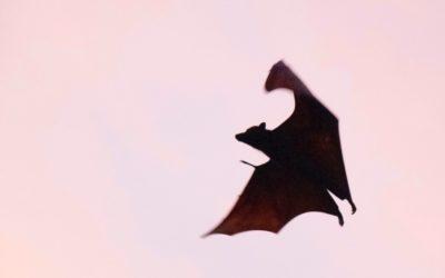 Healing with Bat Medicine